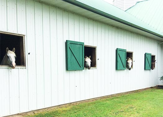 Horses Looking out of Barn